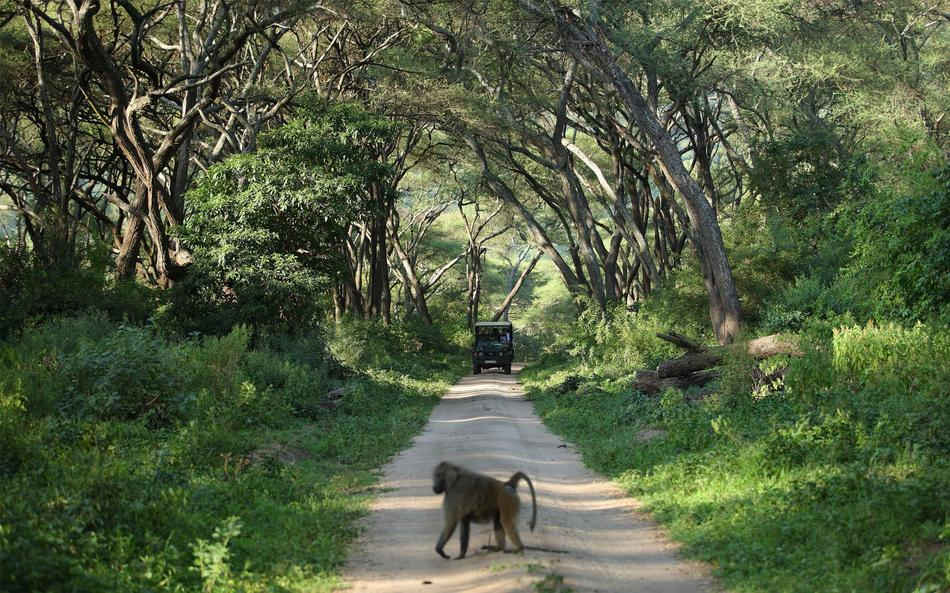a-tanzania-safari-at-andbeyond-lake-manyara-tree-lodge-14.jpg.950x0